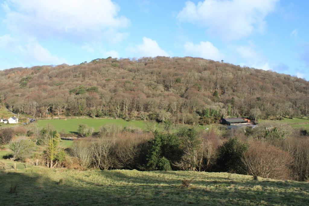 Craigagh Wood