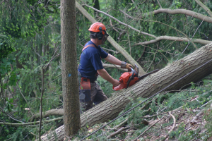 Tree Felling - Woodland Trust