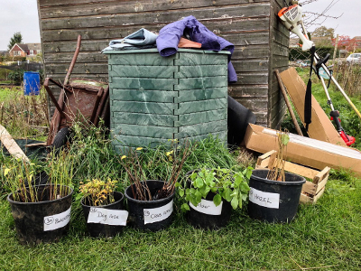 Free tree saplings to green up your town