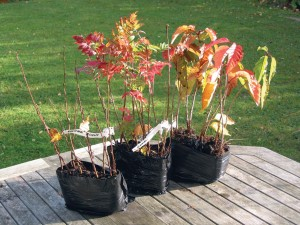 Autumn saplings - free tree pack from the Woodland Trust
